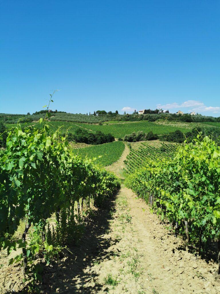 Dì Wine vino aromatizzato